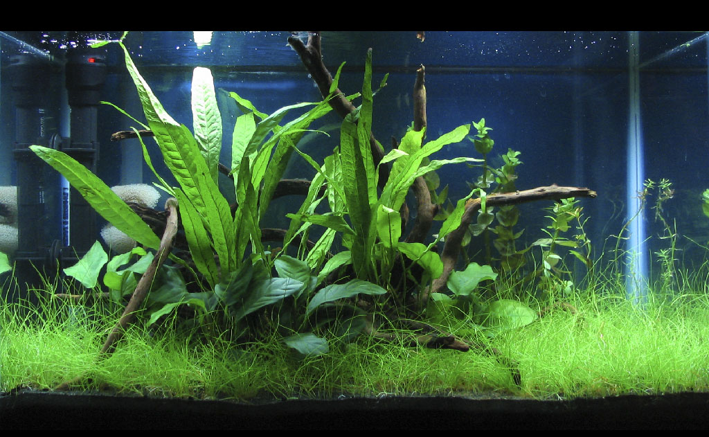 ... front-view_july_11.jpg ...  sc 1 st  Planted Aquarium Fertilizer & Planted Aquarium Fertilizer - How To Articles azcodes.com