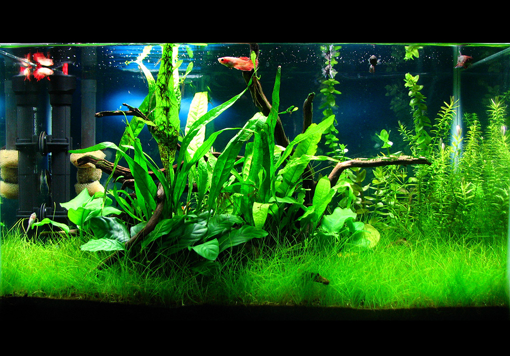 really small tank, but still nicely planted - http://i79.photobucket ...