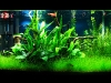 fts_1-small.jpg